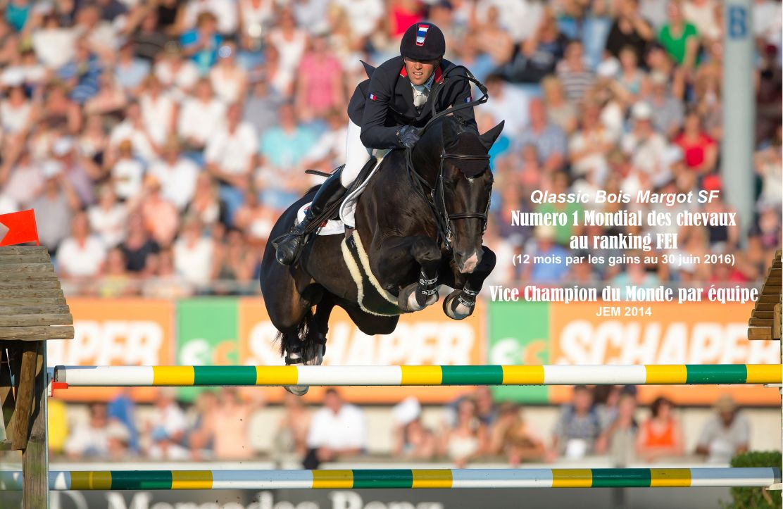 sf studbook du cheval selle français ansf amazon